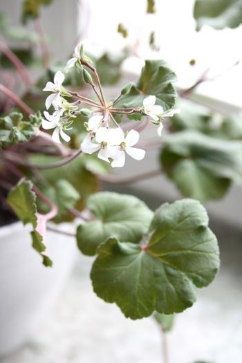 .Nordiska trädgårdar 2012:2