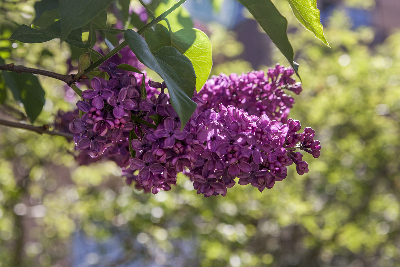 Blommor 10