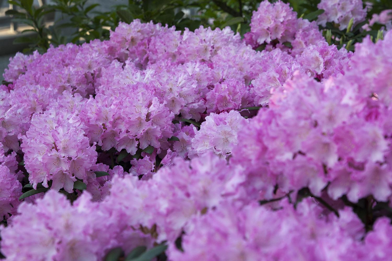 Blommor 7