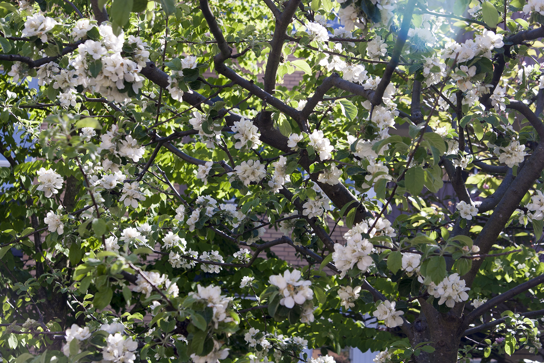 Blommor 9