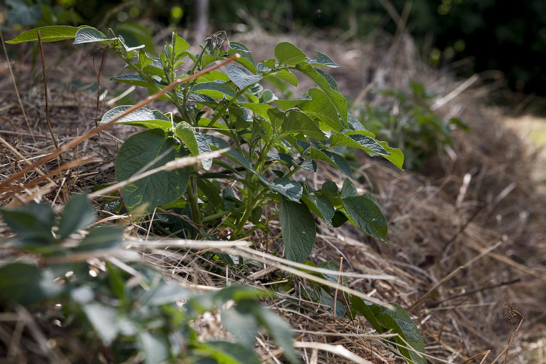 På-landet-odlingen – och en påminnelse om att samla fröer