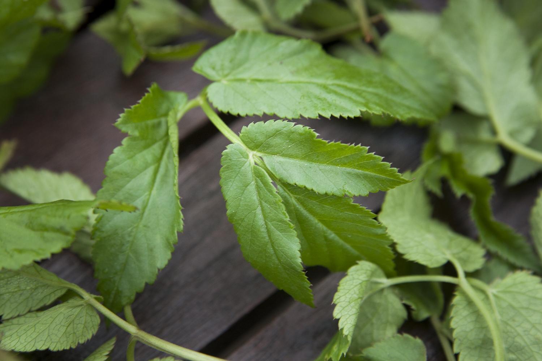 Kirskål – från hatat ogräs till älskad grönsak