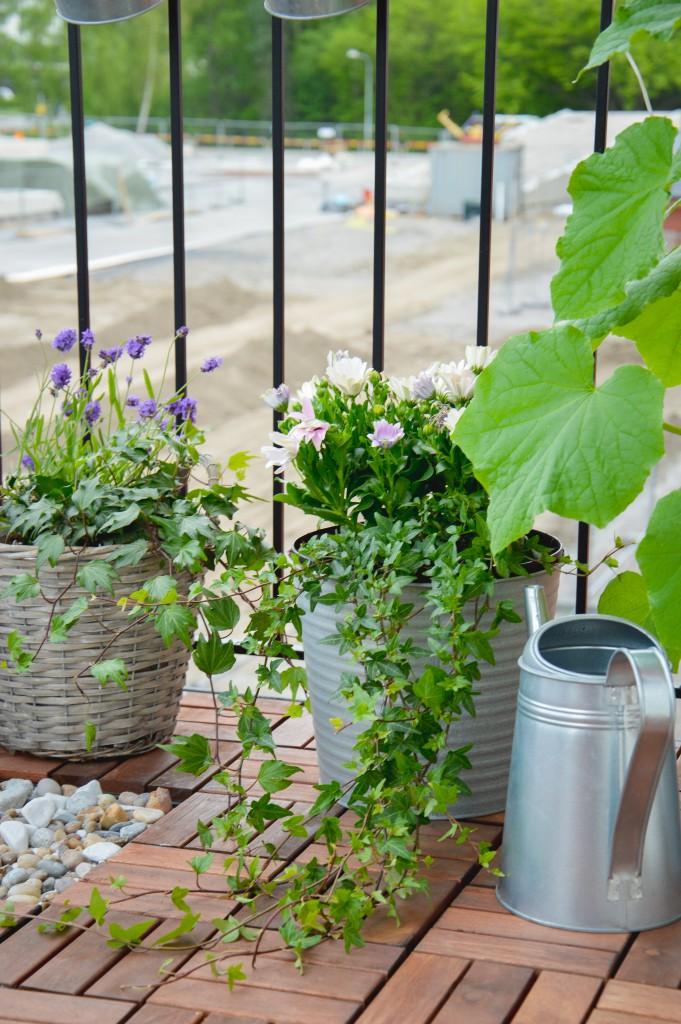 Vår gröna balkong
