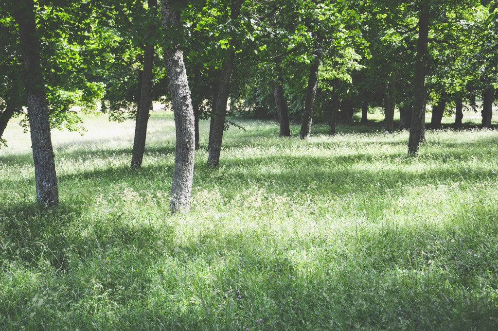 Rosenhill_Drottningholm-018