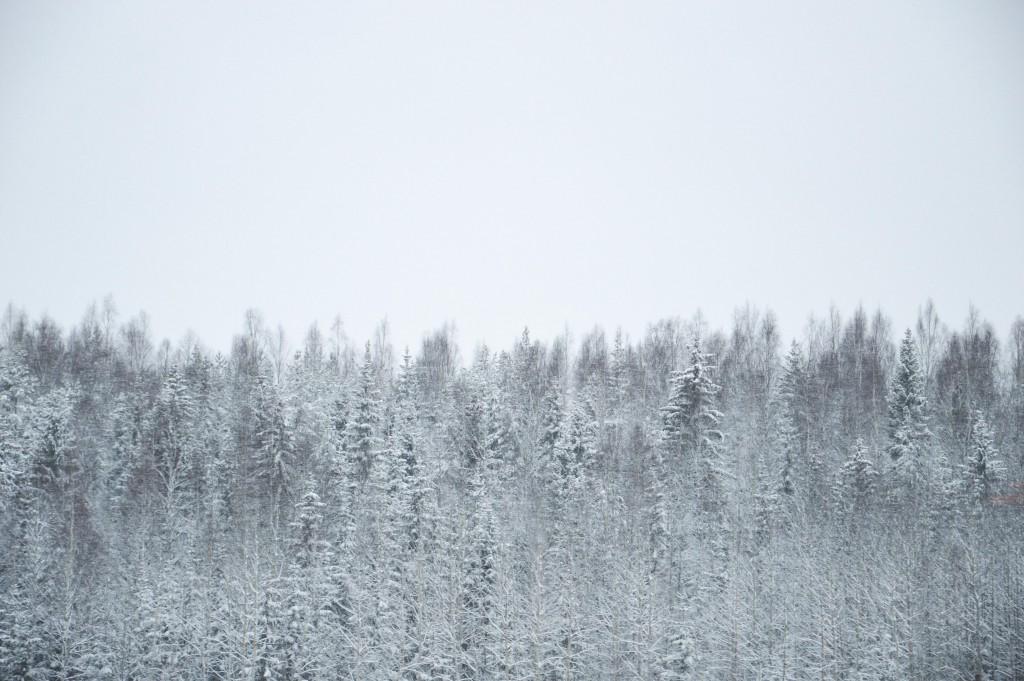 En vintermorgon