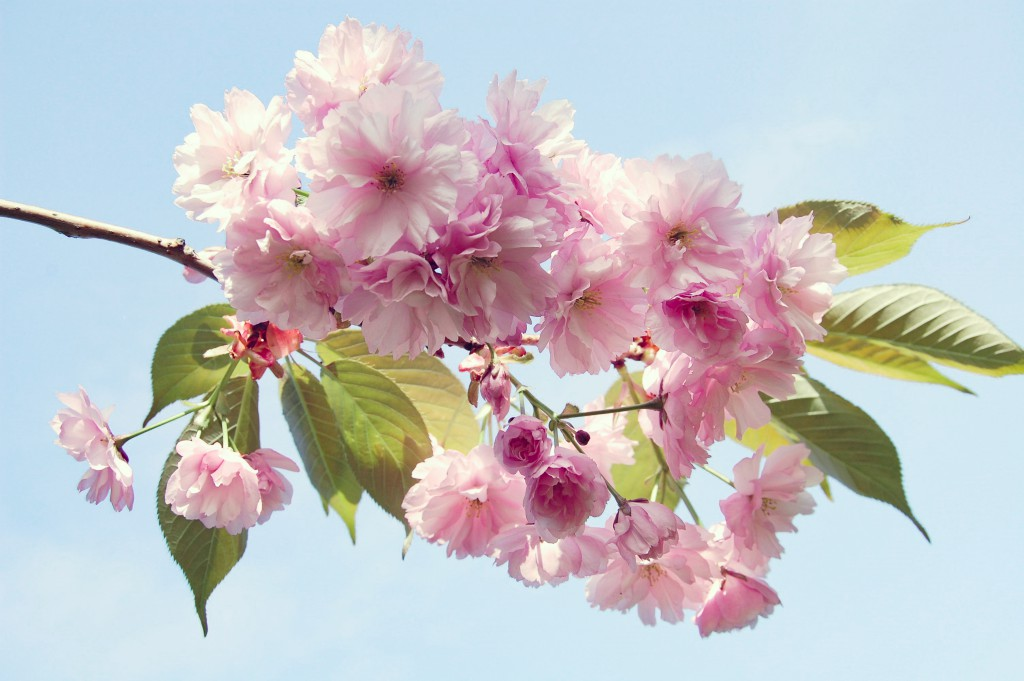 50 nyanser av rosa