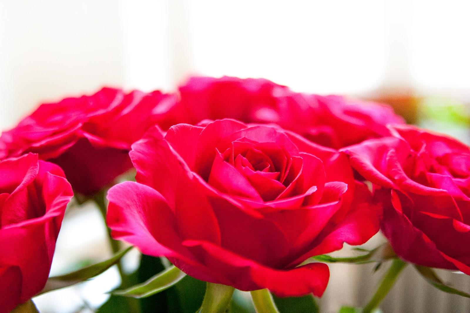 Rättvisa rosor