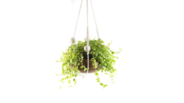 Lucka 6: Plant hanger