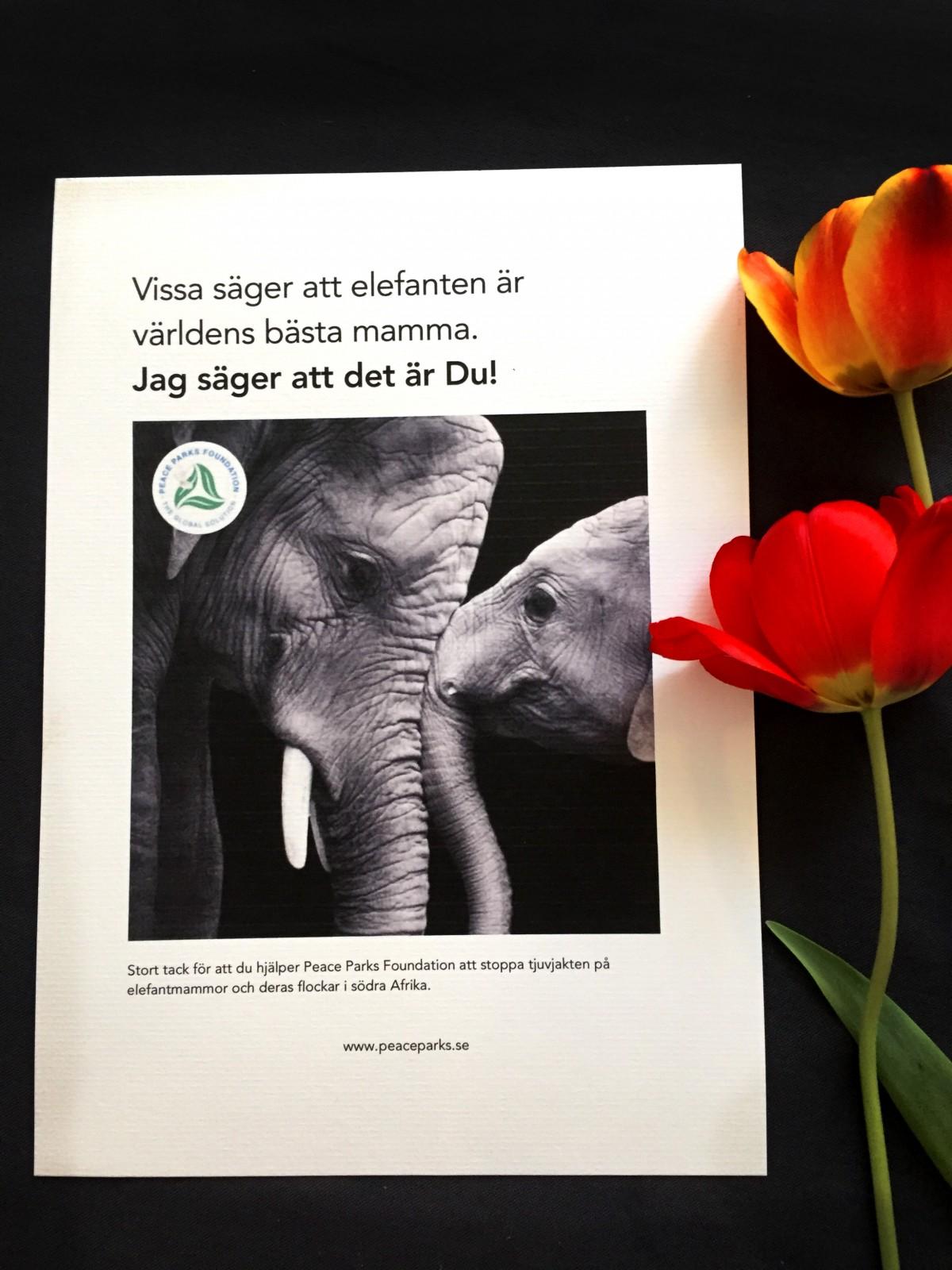 Hjälp en utrotningshotad mamma på   Mors Dag