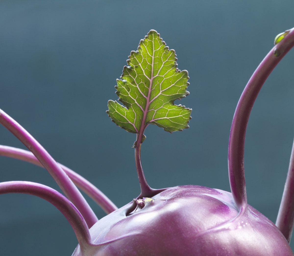 Framtidens Mat & Dryck – En utställning om visioner, hälsotrender och klimatmat på Spritmuseum