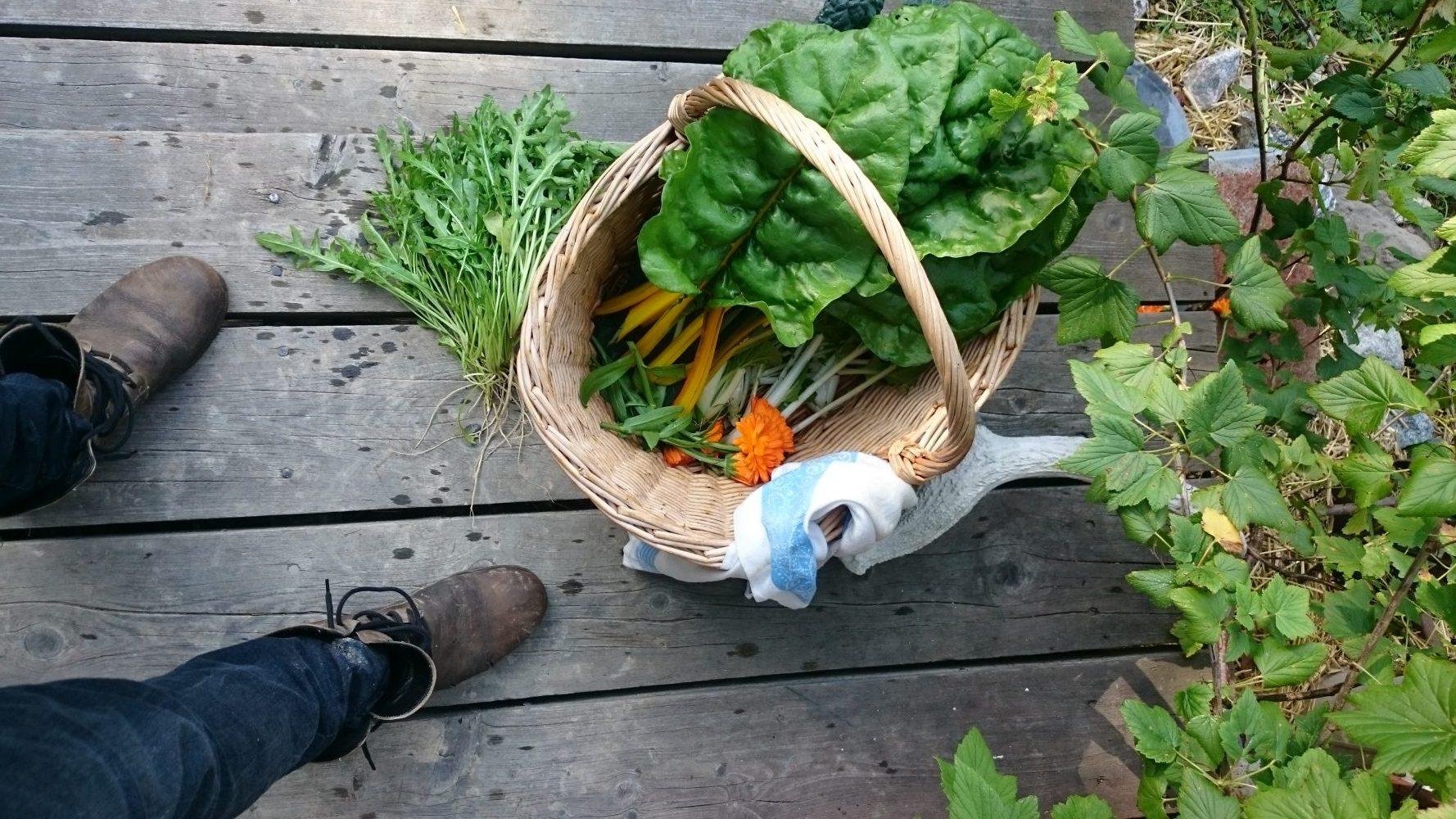 Elin Unnes. Om odling och odlare.